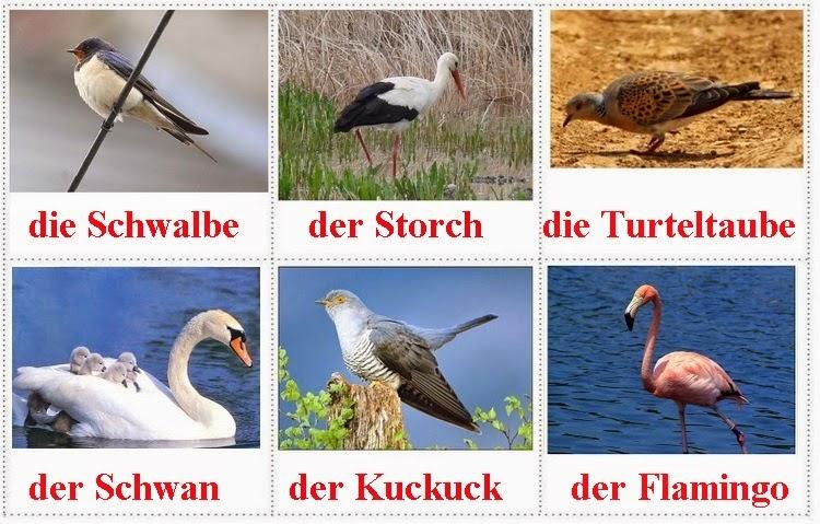 lloje-zogjsh-shpendesh-gjermanisht
